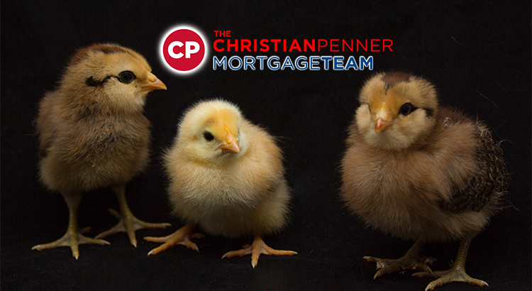 #christianpenner, #ChristianPennerMortgageTeam, #DreamHome, #FannieMaeLoans, #FHAloans, #Fix&FlipLoans, #ForSale, #FreddieMacLoans, #HouseHunting, #JumboLoans, #mortgagebroker, #MortgageLenderWestPalmBeach, #MortgageRates, #NewHome, #PrivateLoans, #RealEstate, #ReverseMortgages, #SelfEmployedLoans, #USDALoans, #VALoans, mortgage broker west palm beach, palm beach mortgage, mortgage brokers palm beach county, hard money lenders west palm beach, palm beach mortgage, mortgage brokers palm beach county, the mortgage team, palm beach mortgage group, plam mortgage, jupiter lending, mortgage companies in florida, mortgage broker west palm beach, palm beach mortgage, mortgage brokers palm beach county, hard money lenders west palm beach, west palm beach mortgage company, mortgage rates, simple mortgage calculator, mortgage amortization calculator, mortgage calculator with pmi, mortgage calculator zillow, mortgage calculator texas, mortgage cost calculator, mortgage simple definition, va mortgage calculator, va mortgage rates, va home loan requirements, va loan benefits, va home loan benefits, va loans bad credit, va home loan certificate of eligibility, va personal loan, usda rural development, usda mortgage calculator, usda direct loan, usda mortgage rates, usda loan credit requirements, usda lenders, usda loan income limits, usda direct loan income limits, usda loan calculator, usda loan rates, usda direct loan, usda mortgage rates, usda home loan calculator, what does usda do, usda loan income requirements, usda loan eligibility map, usda loan rates 2018, usda lenders, usda loan income limits, usda business loans, usda loan home condition requirements, usda home loan map, usda credit score waiver, what does aphis stand for, quicken loans 1 down payment, fha mortgage lenders near me, usda loan requirements pa, what does fsis stand for, usda organic full form, top usda lenders, does quicken loans do 203k, where to apply for a usda home loan, mortgage calculator, what is a jumbo loan, jumbo loan rates, fha loan limits florida 2018, what is a gse loan, gse 1 unit limit, va loan limits florida, conventional loan limits florida 2018,